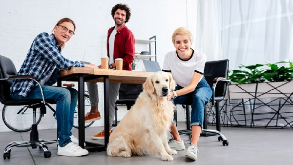 Start-ups that now combine innovation and pet care